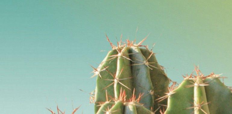 p4_couverture_brochure_cactus